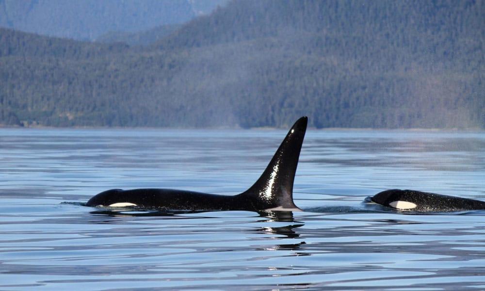 Juneau News 2